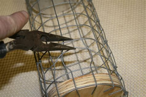 house sparrow trap plans starling traps homemade homemade ftempo