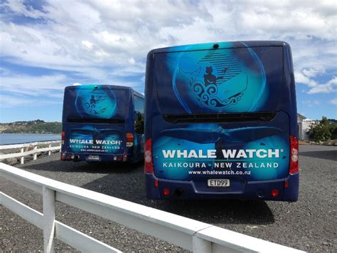 vinyl boat wrap auckland vinyl vehicle boat wraps nz auckland wellington
