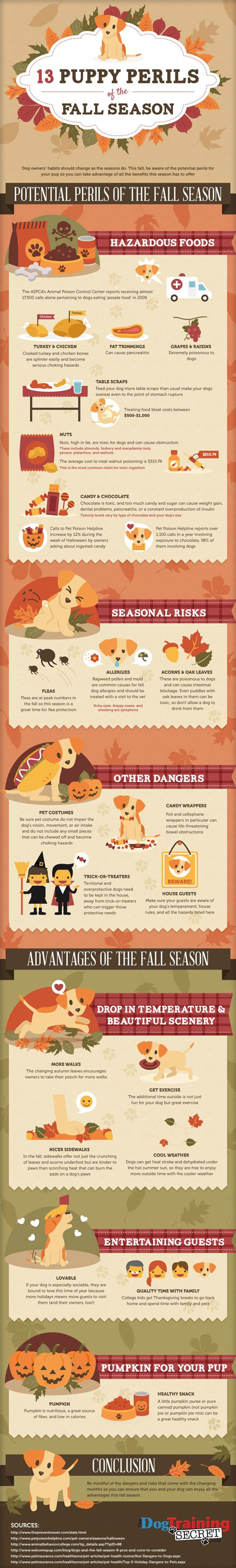 puppy season 13 puppy perils of the fall season infographic thedogtrainingsecret