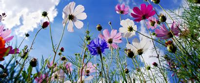 offerte fiori offerte giardinaggio fiori bulbi semi offerte shopping