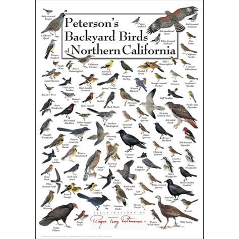 peterson s backyard birds of northern california poster