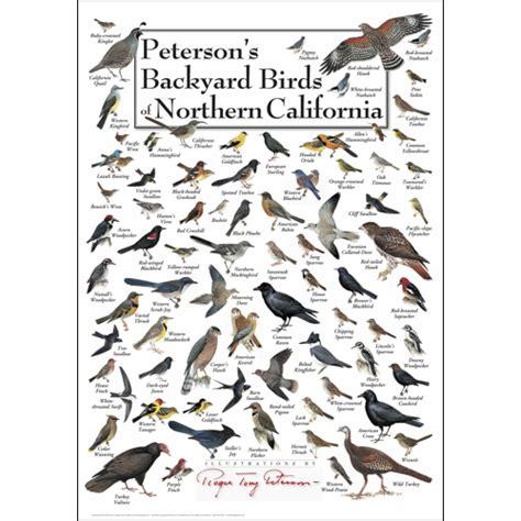 backyard birds of southern california peterson s backyard birds of northern california poster