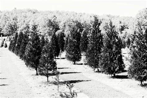 romance christmas tree farms 72136 romance 1260 highway