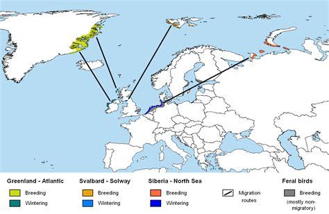 File:Branta leucopsis map.png - Wikimedia Commons
