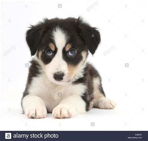 how much to feed a 6 week puppy what to feed a 6 week border collie wiring diagrams wiring diagram schemes
