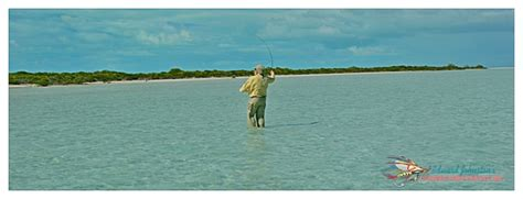 Island Time In Abaco It S My Blog Birthday Party And I - abaco lodge report on bonefishing great abaco island