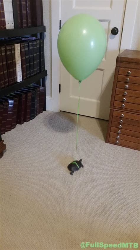 25 best ideas about pet turtle on pinterest turtles baby turtles and peeing pictures
