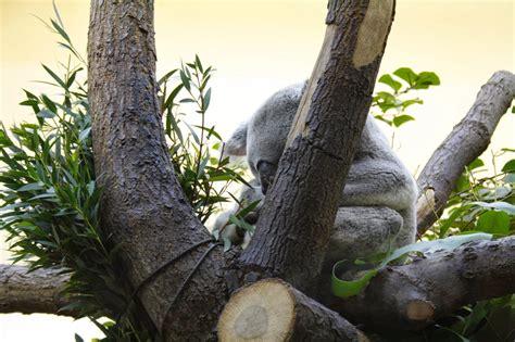 giardino zoologico vienna il design viaggiando continuando con la doppia v wien