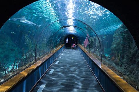 imagenes de web tunnel free photo shark tunnel aquarium loropark free image