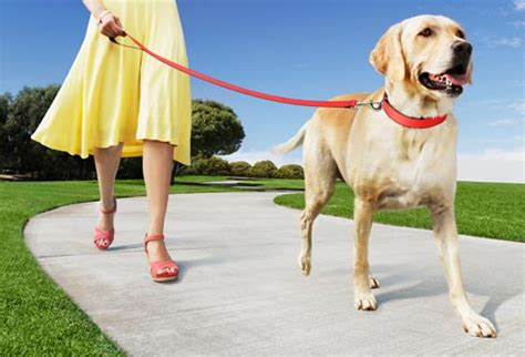 how does it take for puppies to walk 10 things you can do with daylight sparkle design and decor