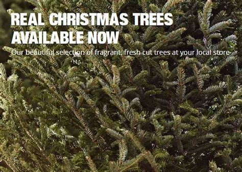 home depot real christmas tree where to get a tree my winter fl