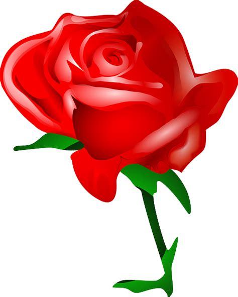 wallpaper bunga mawar vektor gambar vektor gratis rose bunga cinta romantis