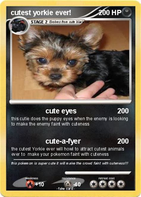 the cutest yorkie in the world yorkie card images images