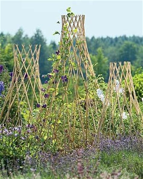 garden structures for climbing plants trellis guide how to choose the best supports for
