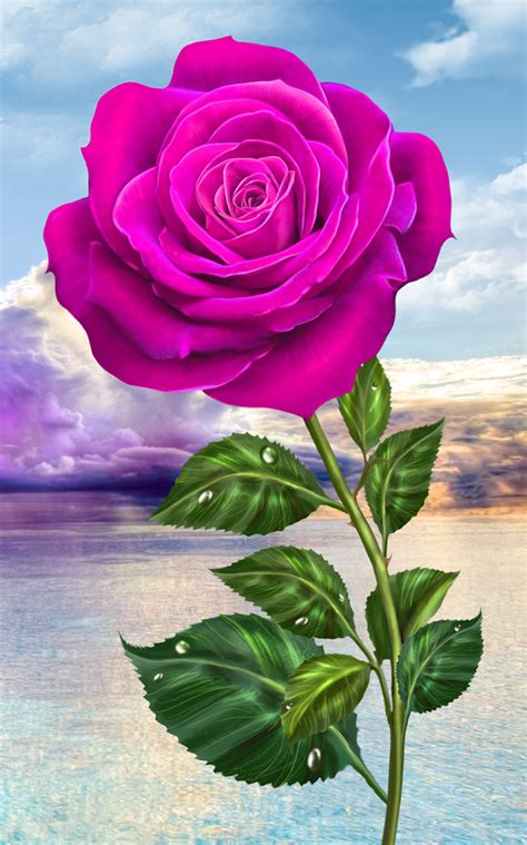 google images flower rose magic touch flowers android apps on google play