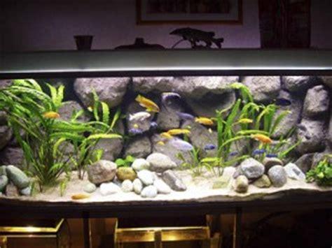 Best Substrate For Aquascaping Cichliden Aquarium Inrichten Tips Amp Voorbeelden