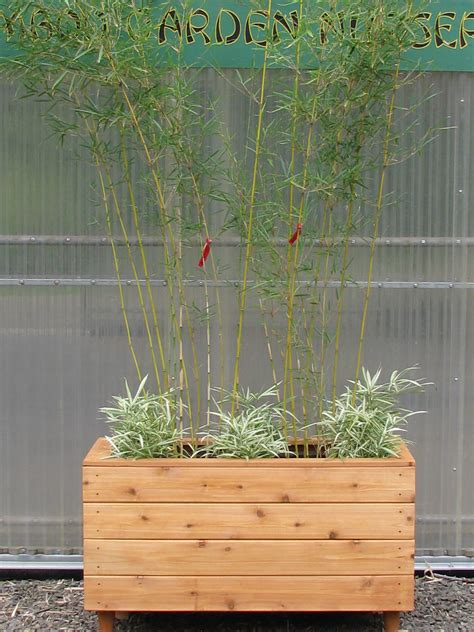 Planters For Bamboo by Bamboo Planters