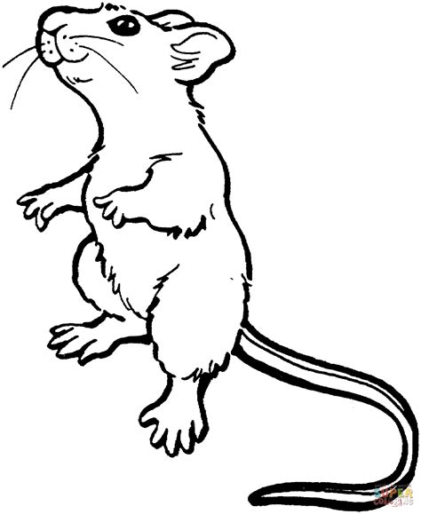 color mouse mouse standing up coloring page free printable coloring