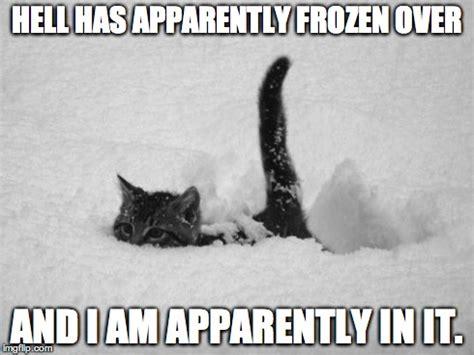 Fuck You Cat Meme - image gallery snow meme