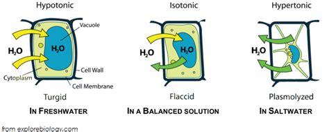 hypertonic diagram explain in brief the process of hypertonic