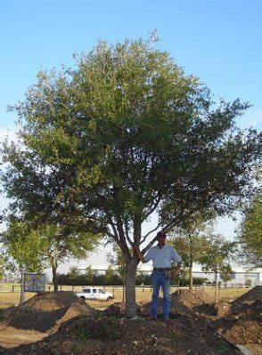 where to get best live tree prices nursery tree prices thenurseries