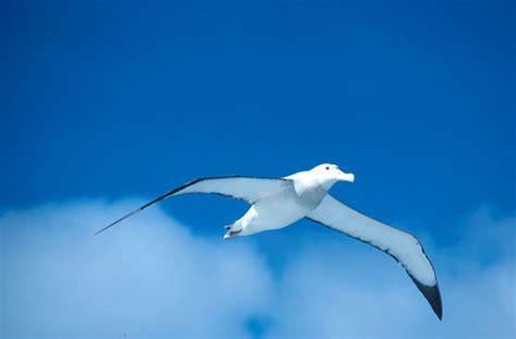 l albatro testo charles baudelaire l albatros una finestra sul web 2 0