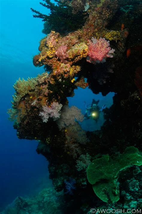 diving hairstyles diving fiji the soft coral capital of the world scuba