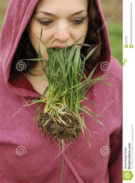 eats grass eat grass stock image image of green gardens morning 4762525