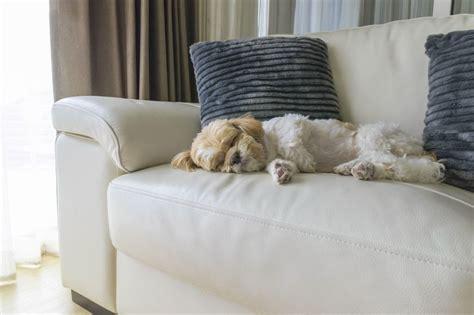 curled up on the sofa dieci regole da rispettare quando si 232 ospiti da amici
