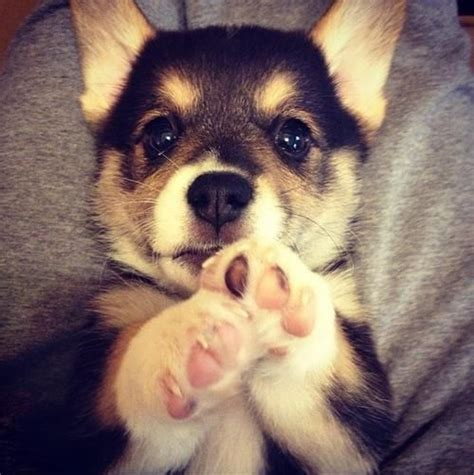 cute puppy wallpapers little dog s paws images app fofo tumblr pesquisa google lindo demais pinterest