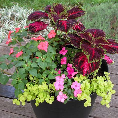 Design For Potted Plants For Shade Ideas South Central Gardening Container Garden Ideas For Tx And Ok