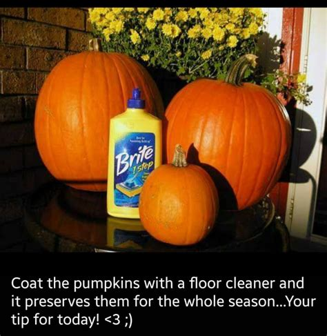 how to preserve pumpkins for amazing fall ideas you will adore