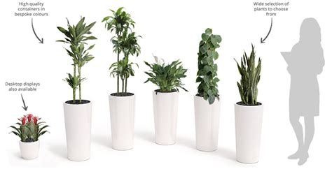 plants for office office plant prices and packages inleaf