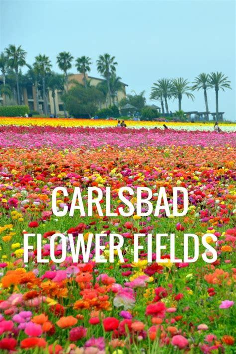 flower garden carlsbad carlsbad flower garden carlsbad flower gardens flickr