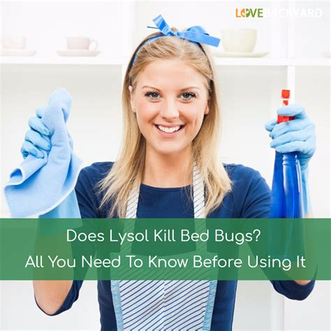 does lysol kill bed bugs does lysol kill bed bugs all you need to know before