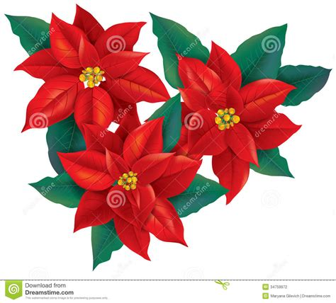 clipart di natale gratis fiore rosso di natale della stella di natale illustrazione