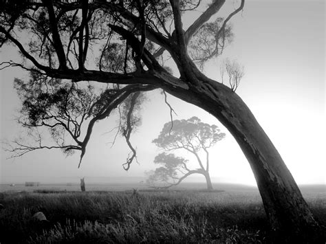beautiful black  white nature photography