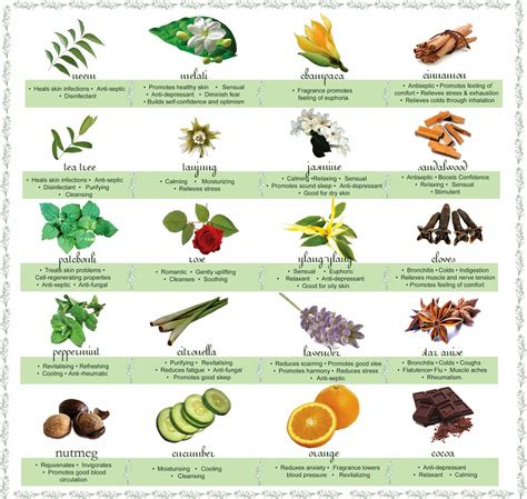 herb care chart the exciting world of oils and their benefits in hair care part 2 kl s naturals