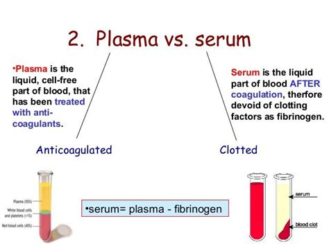 Vitamin Albumin 27 best images about vessels on serum mammals