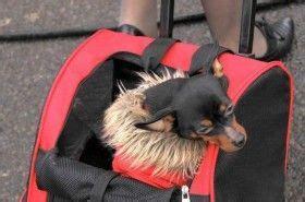 Tas Webe Lop preparar las vacaciones con el perro eroski consumer