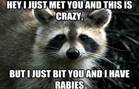 Most Hilarious Meme - 19 uber cute and funny animal memes page 5