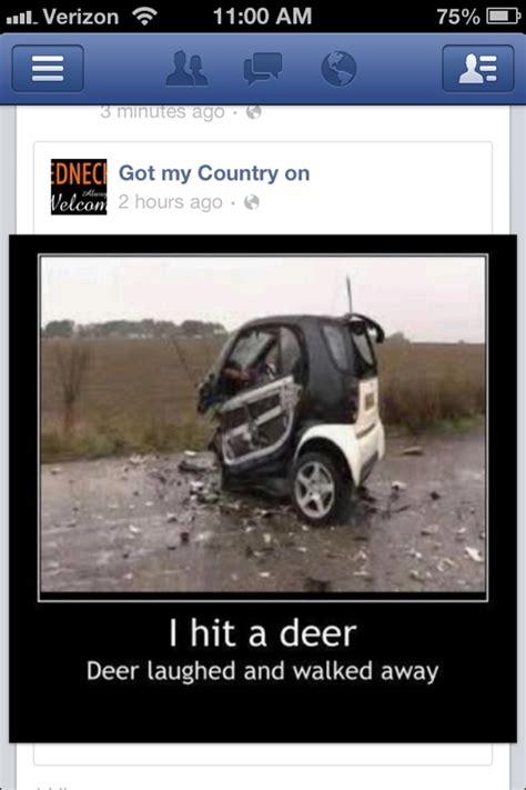 smart car vs deer deer wins bad drivers ahead