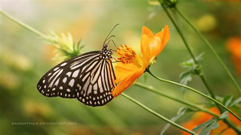 exle of symbiosis image gallery mutualism
