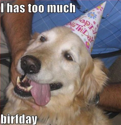 Dog Birthday Meme - 25 best ideas about happy birthday dog meme on pinterest