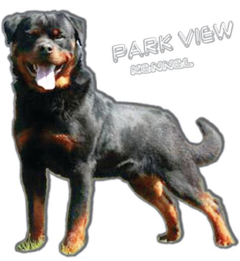 rottweiler malaysia parkview ch rottweiler breeders malaysia for sale at ipoh perak malaysia