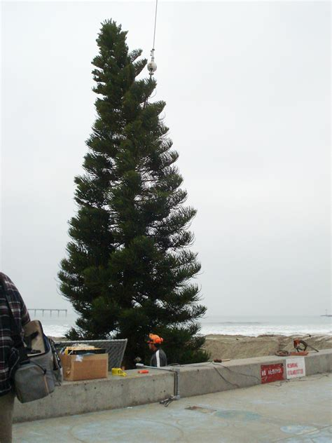 ob christmas tree 2008 ocean beach san diego ca