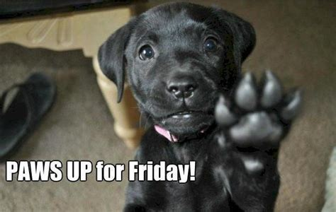 friday puppy friday give friday a paw doggies