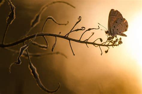 imagenes de mariposas national geographic national geographic photo contest 2012 the atlantic