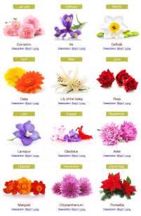 February Birthstone And Flower - birth month flowers on pinterest december birth flowers
