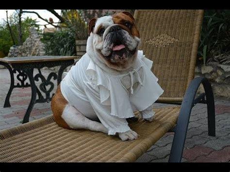 farting in the bathtub song farting in the tub bulldog bath time splish splash youtube